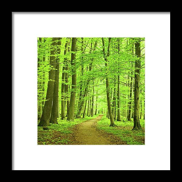 Curve Framed Print featuring the photograph Forest Path by Nikada