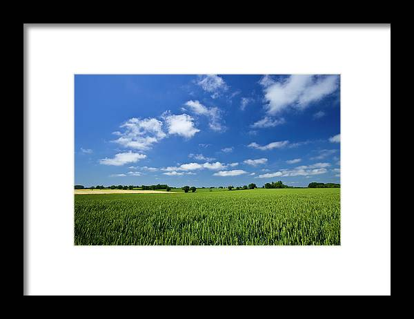 Environmental Conservation Framed Print featuring the photograph Fresh Air. Blue Skies Over Green Wheat by Alvinburrows