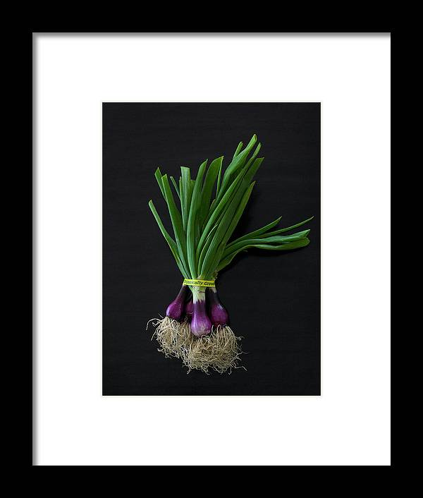 Wrapped Framed Print featuring the photograph Fresh Organic Red Spring Onions by Armstrong Studios