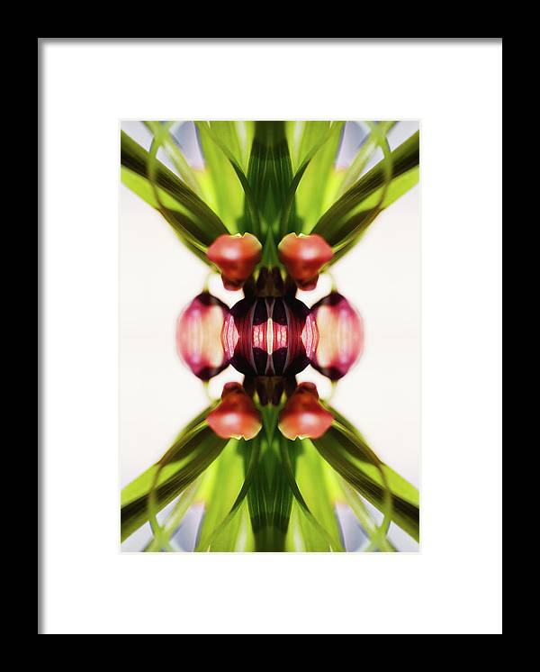 Bud Framed Print featuring the photograph Fritillaria Flower by Silvia Otte