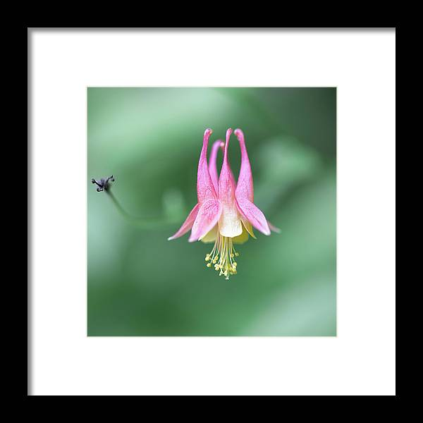 Art Framed Print featuring the photograph From A Summer Walk In The Woods by Jakub Sisak