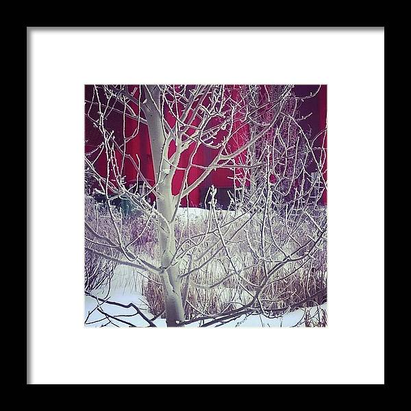 Winter Framed Print featuring the photograph Frost by Johanna Wray