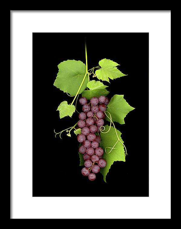 Framed Print featuring the photograph Fruit Of The Vine by Sandi F Hutchins