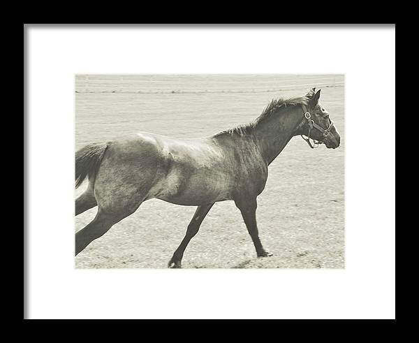 Middleburg Framed Print featuring the photograph Full Galloping by JAMART Photography
