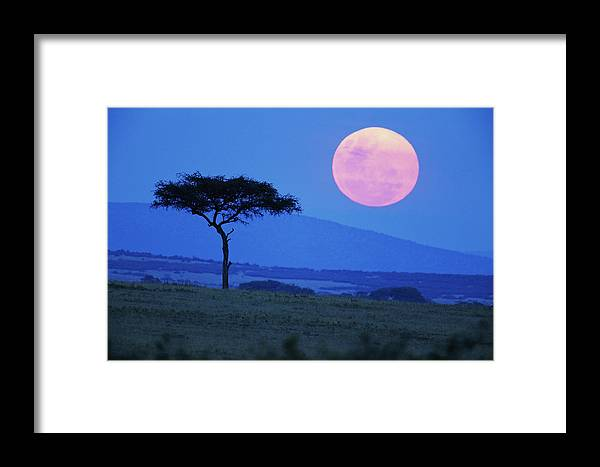 Scenics Framed Print featuring the photograph Full Moon Rising Above Tree, Savanna by Paul Souders