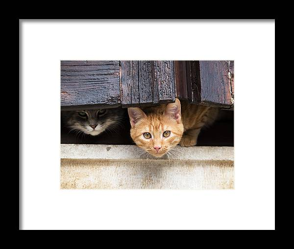 Fur Framed Print featuring the photograph Fwo Cars Hiding Behind The Window by Nevenm