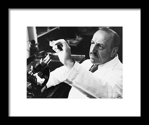 Microscope Framed Print featuring the photograph George Papanicolaou Examining A Slide by Bettmann