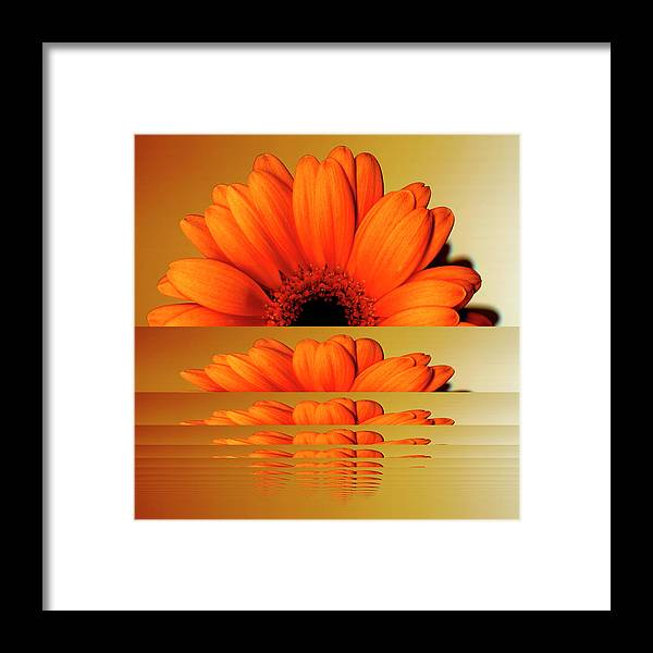 Orange Color Framed Print featuring the digital art Gerbera Flower As Rising Sun by Eversofine