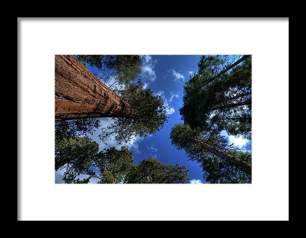 Sequoia Tree Framed Print featuring the photograph Giant Sequoias - 2 by Rhyman007