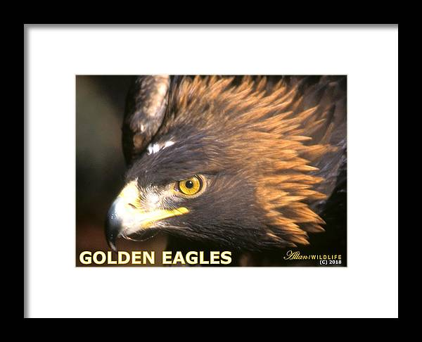 Eagles Framed Print featuring the photograph Golden Eagles Mascot 10 by Larry Allan
