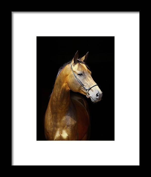 Horse Framed Print featuring the photograph Golden Horse by Photographs By Maria Itina