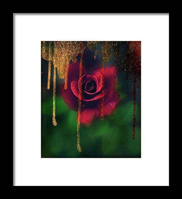Rose Framed Print featuring the photograph Golden Moments Of A Garden Rose by Toni Hopper