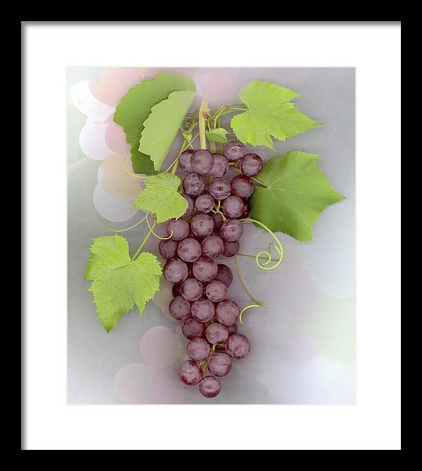 Grapes Framed Print featuring the photograph Grapes on Grapes by Sandi F Hutchins