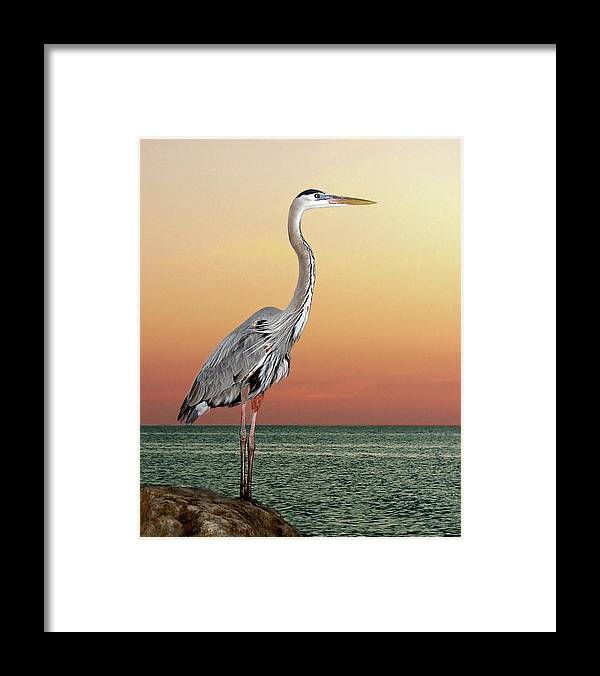 Scenics Framed Print featuring the photograph Great Blue Heron In Seaside Sunset by Melinda Moore