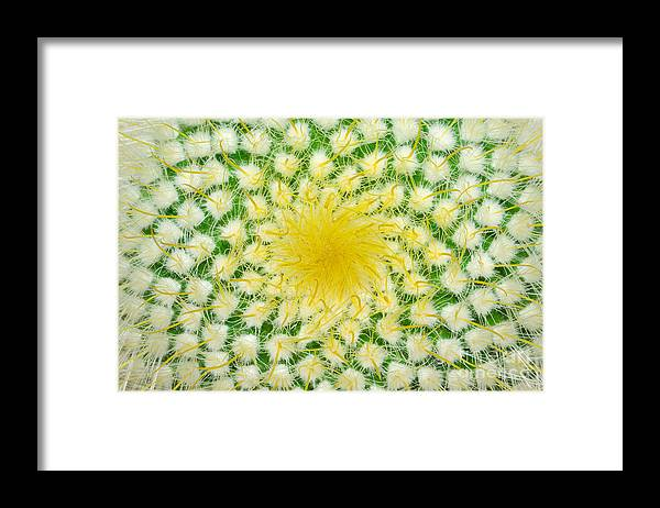 Barb Framed Print featuring the photograph Green Cactus And Yellow Prickles by Ruslan Grechka