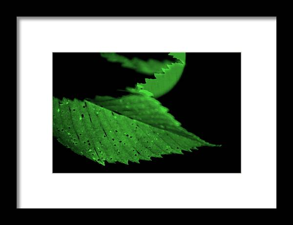 Leaf Framed Print featuring the photograph Green Leaf in Sun by Lonnie Paulson