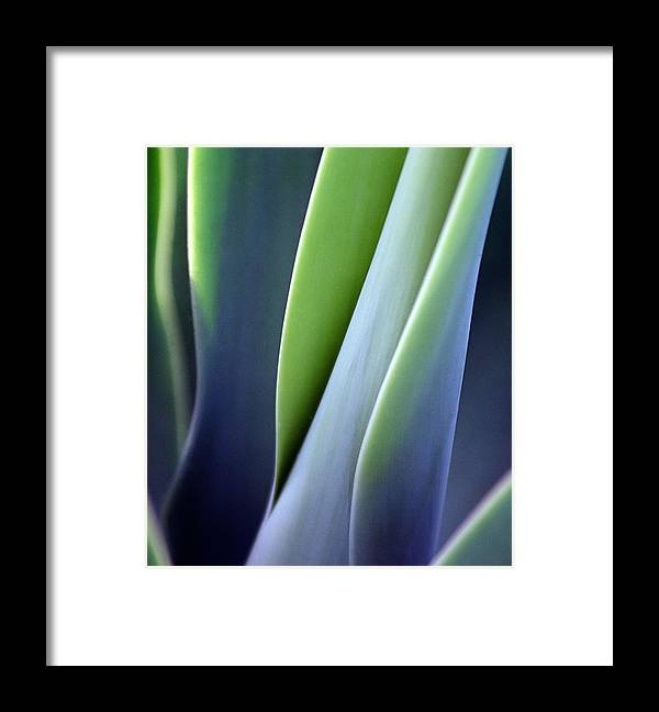 Sparse Framed Print featuring the photograph Green Smooth Leaves by Sergeo syd