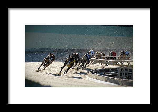 Dust Framed Print featuring the photograph Greyounds 3 Of 7 by Dplight