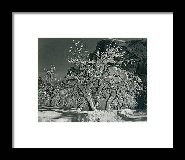 Social Issues Framed Print featuring the photograph Half Dome, Apple Orchard, Yosemite by Archive Photos