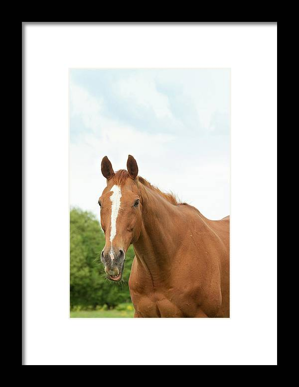Horse Framed Print featuring the photograph Happy Horse by Groomee
