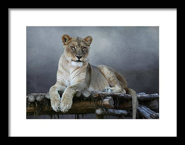 Studio Dalio - Happy Lioness Framed Print