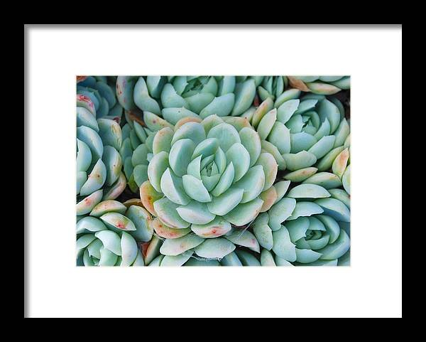 Scenics Framed Print featuring the photograph Hens And Chicks Succulent by Lazingbee