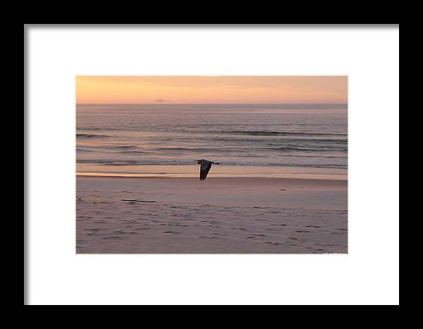 Framed Print featuring the photograph Heron On The Downwing by Laura Martin
