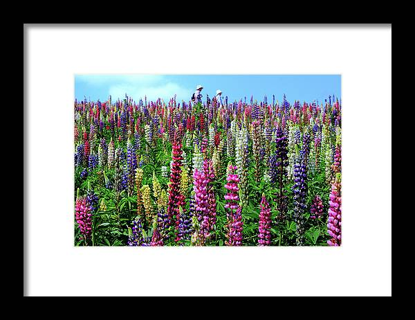 Scenics Framed Print featuring the photograph Hokkaido by Frank Chen