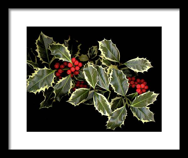 Framed Print featuring the photograph Holly by Sandi F Hutchins