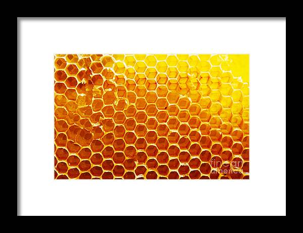 Bee Framed Print featuring the photograph Honey Beehive by Val Lawless