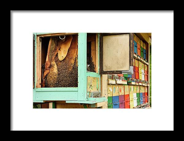 Beekeeping Framed Print featuring the photograph Honeycombs In Open Beehive by Education Images, Universal Images Group/science Photo Library