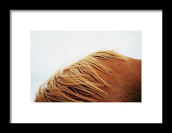 Animal Themes Framed Print featuring the photograph Horse, Close-up by Markus Renner