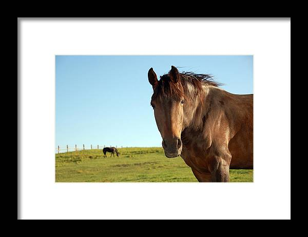 Horse Framed Print featuring the photograph Horse by Esemelwe