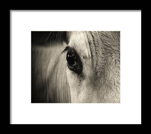Horse Framed Print featuring the photograph Horse Eye by Karena Goldfinch