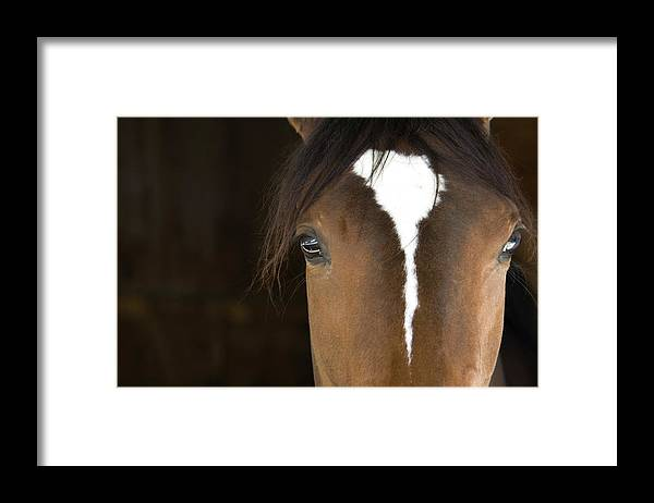 Horse Framed Print featuring the photograph Horse Head by Rterry126