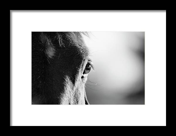 Horse Framed Print featuring the photograph Horse In Black And White by Malcolm Macgregor