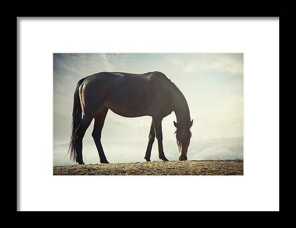 Horse Framed Print featuring the photograph Horse In Wild by Arman Zhenikeyev - Professional Photographer From Kazakhstan