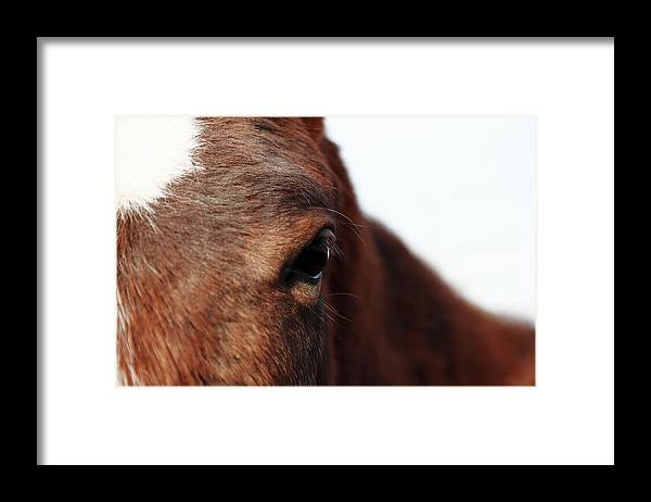 Horse Framed Print featuring the photograph Horse Portrait by R-j-seymour
