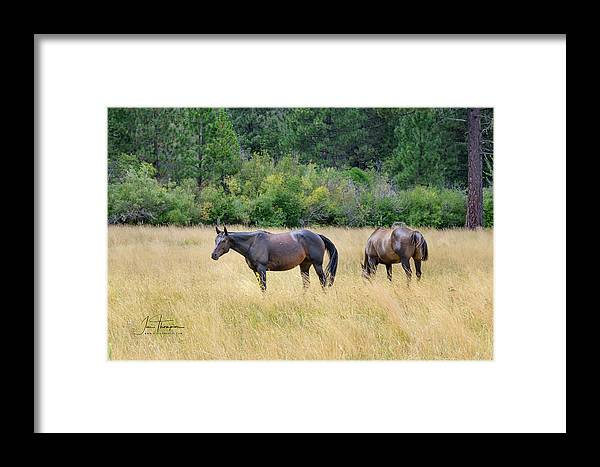 Animals Framed Print featuring the photograph Horses At Pasture by Jim Thompson