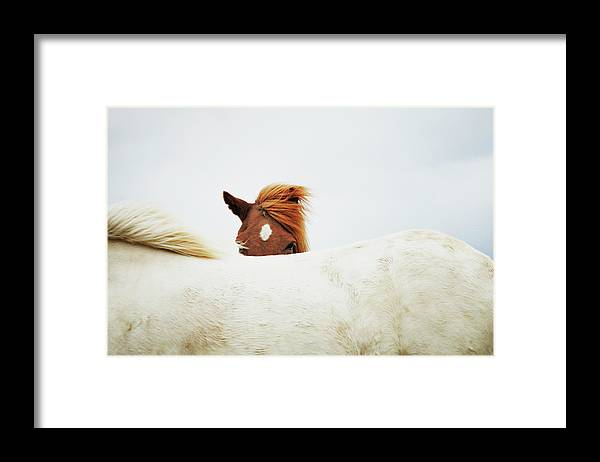 Animal Themes Framed Print featuring the photograph Horses by Markus Renner