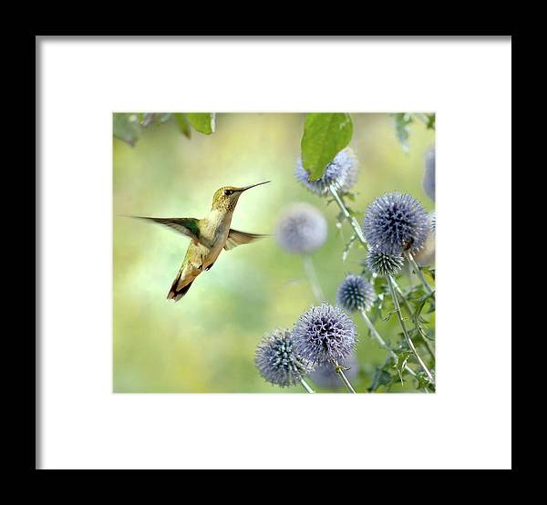 Animal Themes Framed Print featuring the photograph Hovering Hummingbird by Nancy Rose