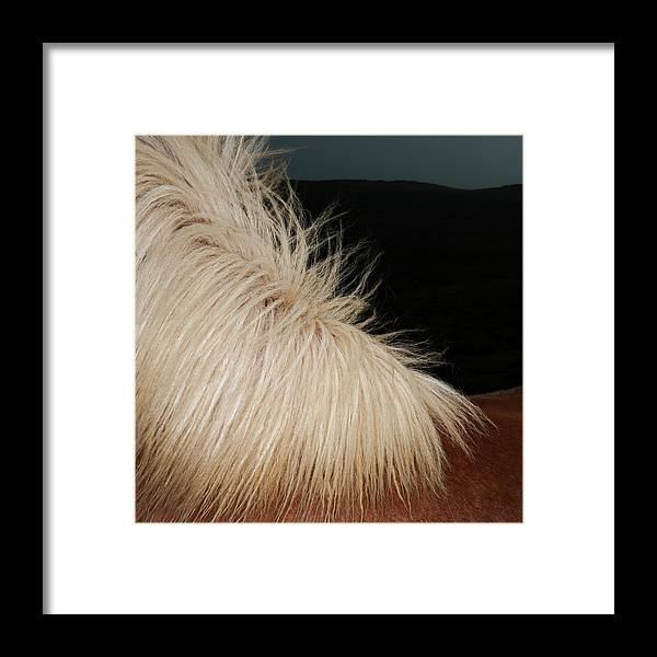 Horse Framed Print featuring the photograph Icelandic Horse by Roine Magnusson