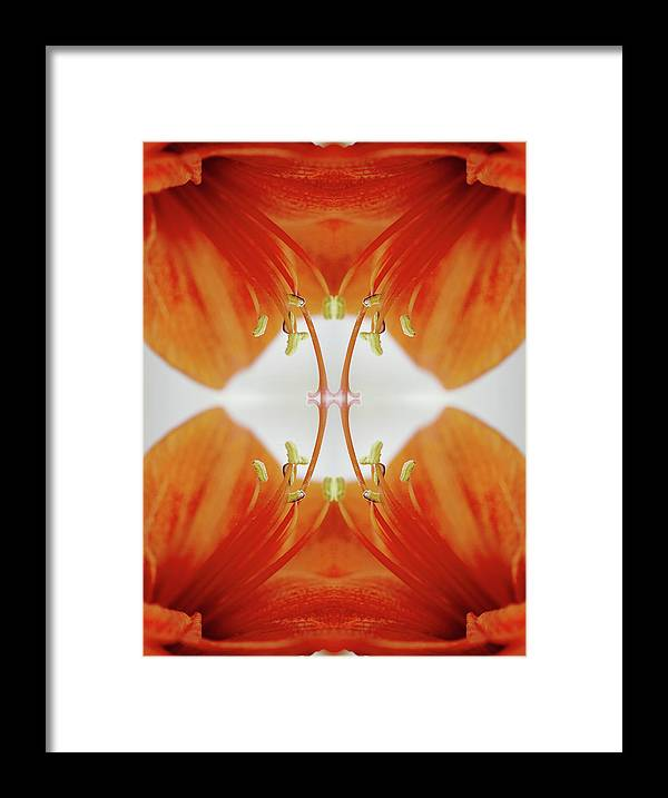 Tranquility Framed Print featuring the photograph Inside An Amaryllis Flower by Silvia Otte