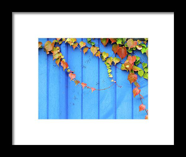 Architectural Feature Framed Print featuring the photograph Ivy On The Door by Zianlob