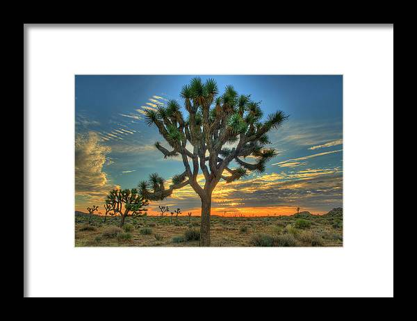 Scenics Framed Print featuring the photograph Joshua Tree At Sunrise by Photograph By Kyle Hammons