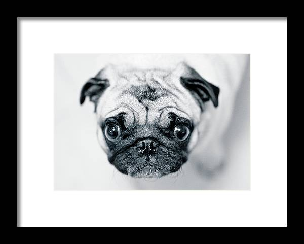 Pets Framed Print featuring the photograph Just Enough by Eddy Joaquim
