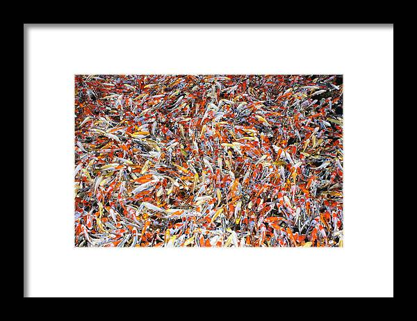 Pets Framed Print featuring the photograph Koi Jigsaw by Chris Edwards