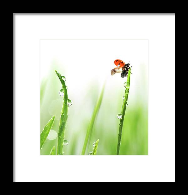 Hanging Framed Print featuring the photograph Ladybug On Green Grass by Sbayram
