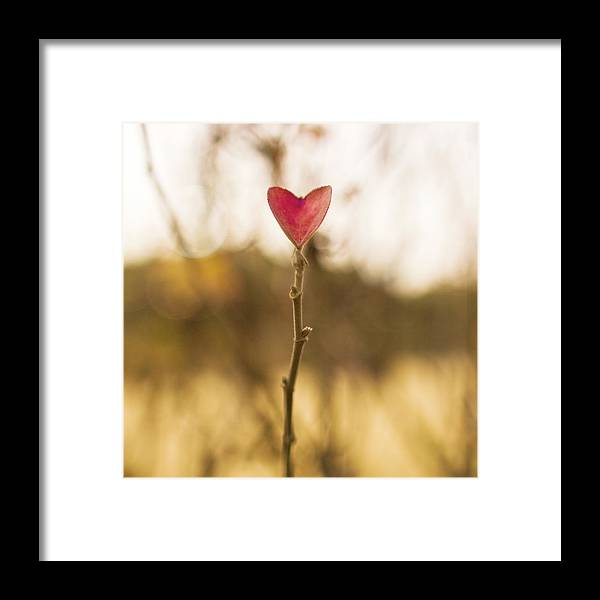 Outdoors Framed Print featuring the photograph Leaf In Heart Shape by Twomeows