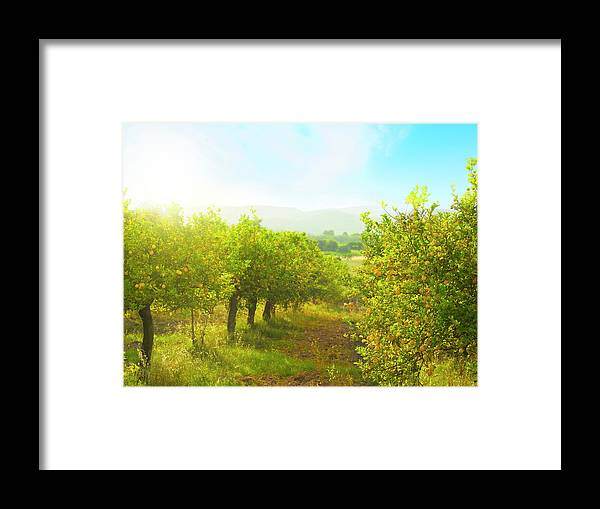Scenics Framed Print featuring the photograph Lemon Orchard by Brzozowska
